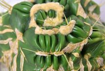 Cactus / サボテン