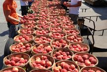 Milburn Orchard's Chin Dribblin' Peaches / Ever had one of our Chin Dribblin' Peaches?  Come see what you're missing! NOT available as a UPICK Adventure, but our Farm Market will let you sample the many varieties, so you'll know which one suits you best!