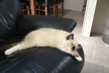 WHITE PETS / THESE ARE THE WHITE PETS FROM HAMILTON, NZ