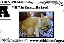 The ABC's of Rikki's Refuge! / Rikki's Refuge Life Unlimited of Virginia, Inc. 10910 Barr Lane Rapidan, VA. 22733 (540)-854-0870 mail@rikkisrefuge.org www.rikkisrefuge.org https://www.facebook.com/RikkisRefuge