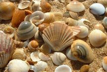 WICCA:magic of: sea shells/feather