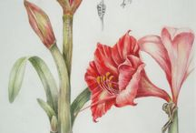 AMARYLLIS BEAUTY AND MEDICAL