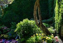 ❤️ Our garden ❤️