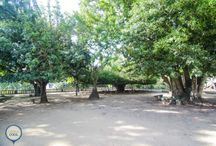 VISITAR   Jardim Botânico da Ajuda