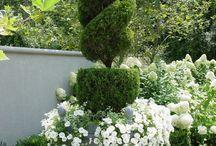 Fleur pour jardin
