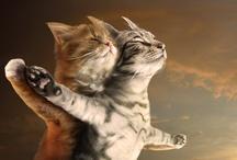 Senhora dos gatos