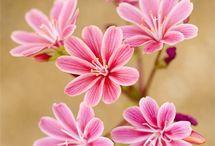 flowers / Beautiful flowers pics