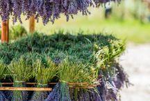 Lavendelgram