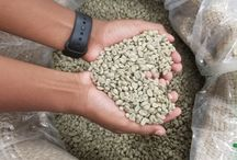 Ethiopian grean coffee / Ethiopian specialty coffee  Ethiopia is the birthplace of coffee