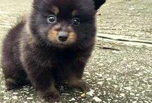 σκυλί που θέλω να πάρω
