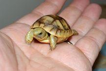 tortoise ❤