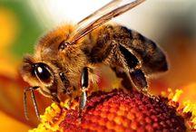Beekeeping / Beekeeping Workshops with Upstairs @ the Market