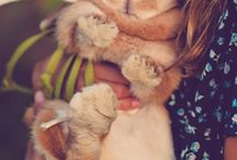 FF_rabbits