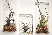 Plant creative