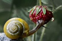 Snails are cute and lovely