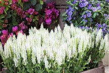Garden Idea's