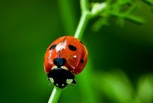 Ladybugs / by Rosanne McPherson