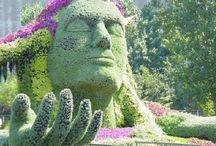 garden / by Rebecca Starry