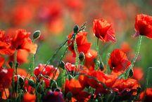 Flowery Fields & Gardens / Fields and Gardens of flowers / by Suzanne Williams