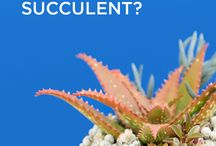 Succulents: Commonly Asked Questions / Indoor Succulents, Succulent DIY, Succulent Care, Succulent Wedding, Propagating, How to Plant Succulents, Succulent Terrarium, Succulent Decor, Succulent Garden, Types of Succulents, Succulents in Containers, How to Water, Succulent Dying