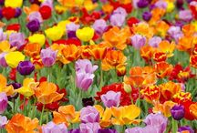 Trend - Garden Rhapsody / one of our trends for 2014 Garden rhapsody- floral, flora abstract, large scale, hue, romantic, love, watercolours, sketch, paintings, blossoms, harvest, vintage, bold, ditsy, free spirit, mismatch, incongruity.
