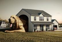 dog palaces / by ~ cheryl mendenhall