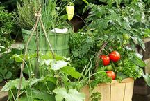 Vegetable and Fruit Gardening in containers