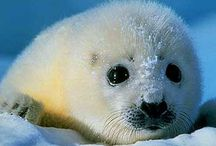 Favorite animals / Just pin cute and your favorite animals