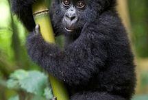 Monkey life / Monkey = friend