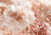 floral board: carnation  {comeback} / by The Perfect Petal