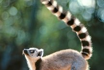 MADAGASCAR ORIGIN
