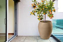 plantar na varanda