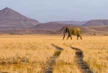 Charme de la Namibie