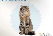 Cat Breed Information