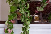 planten en natuur