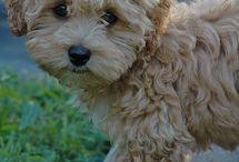 My future Dog :) / by Megan Carey