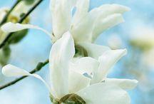 Spring / Lente