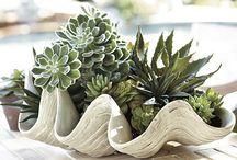 clam shell decor