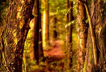 forest at its highest... / lost in the woods