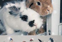 Bunny mama