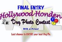 Hollywood Hondentrimmer and dog services / Hondenservices, Leiden, Oegstgeest, Wassenar, Den haag, Voorschoten, Leiderdorp, south Holland. Hondentrimmer, Hondenpension, Hondentaxi, hondenuitlaatservices, Honden Day-Care, Honden Training, Workshops, and more. EVERYTHING DOG!