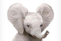 ~olifanten~