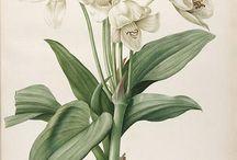 botanica : ilustração