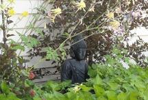 Buddha / by Kathleen Crouse-Bradley