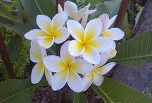 ❀ Virágok ❀