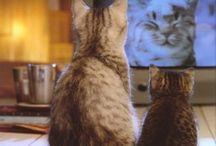 Fern. Cats