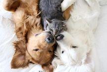 Psy, koty