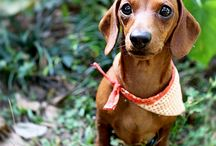 Dogs / Dogs that inspires me