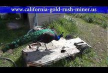 Gold prospecting / by Rodney Clark