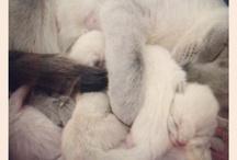 furry babies / by Rebekah Mayes